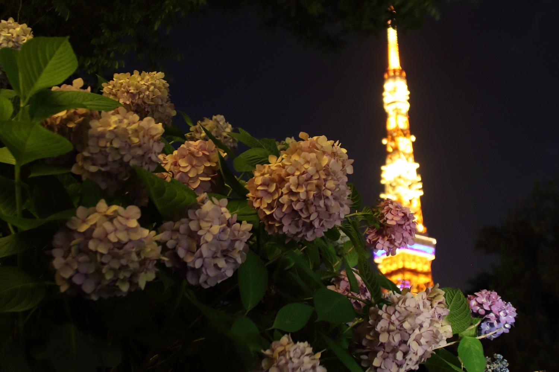 tower and ajisai